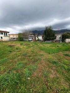 Agricoli - Pietrasanta - Montiscendi