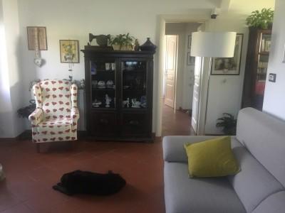 Appartamento - Pietrasanta - Macelli